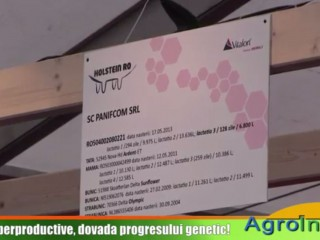 Vacile superproductive, dovada progresului genetic!