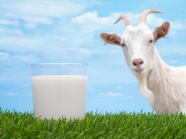 tratamentul artrozei cu lapte de capră)